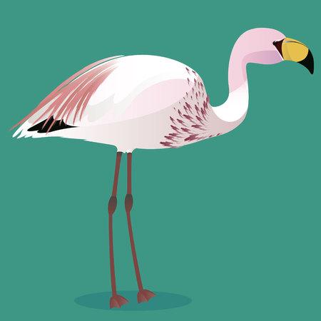 James flamingo cartoon bird