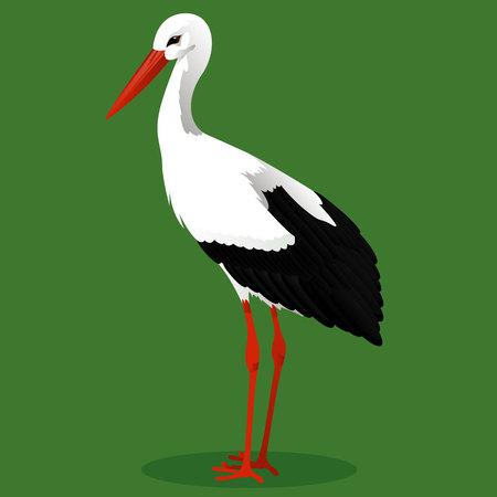 White stork cartoon bird vector illustration