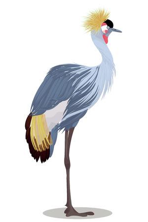 Grey crowned crane cartoon vector illustration