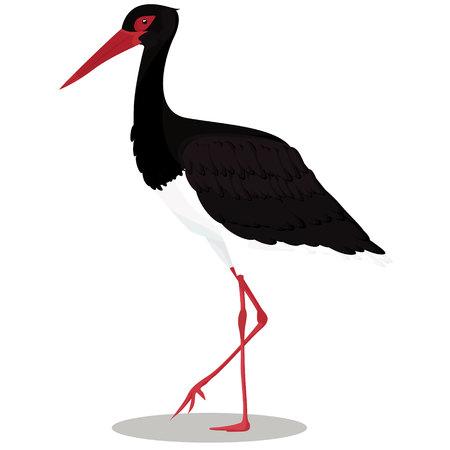 Black stork cartoon bird vector illustration