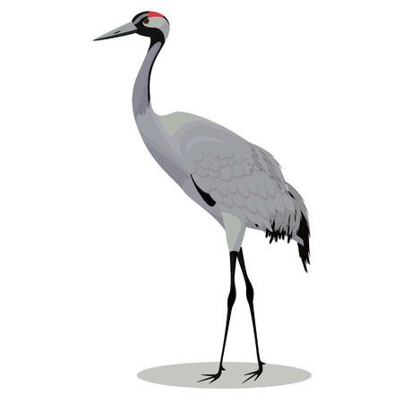 Common crane cartoon