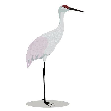 Sandhill crane isolated vector illustration design animal character Çizim
