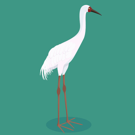 Siberian crane on background vector illustration design animal character Ilustrace
