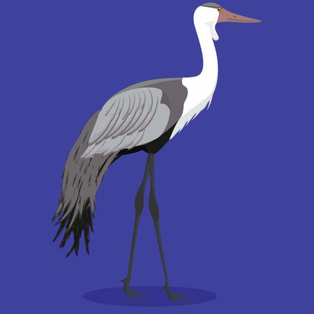 Wattled crane cartoon