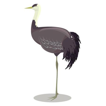 Hooded crane cartoon vector illustration Çizim