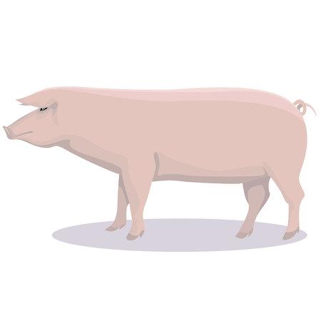 Image of a pig on white backdrop illustration. Ilustrace