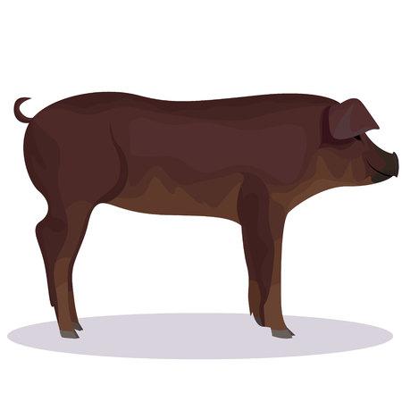 Duroc pig cartoon illustration on white background.