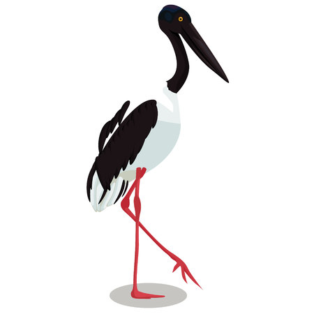 Black necked stork cartoon bird vector illustration.