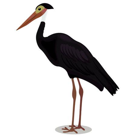 Storm s stork cartoon bird Çizim