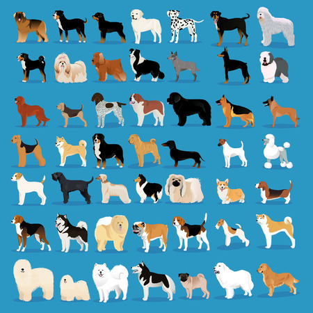 Very big set of dogs