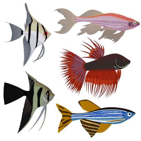 set of cartoon aquarium fish vector Illustration