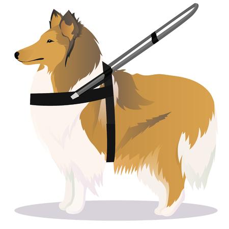 Collie guide dog vector illustration