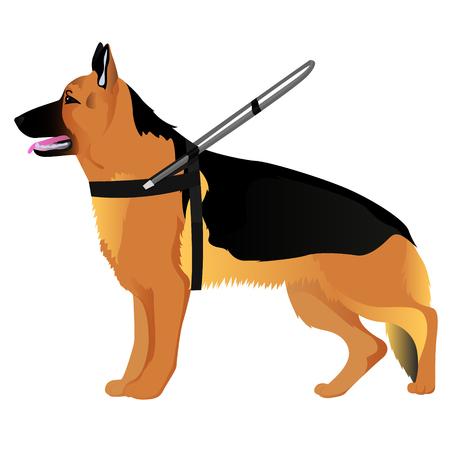 German shepherd guide dog