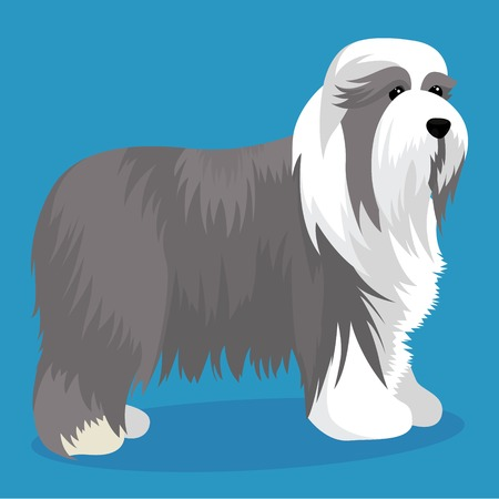 Bearded collie dog vector illustration Illusztráció