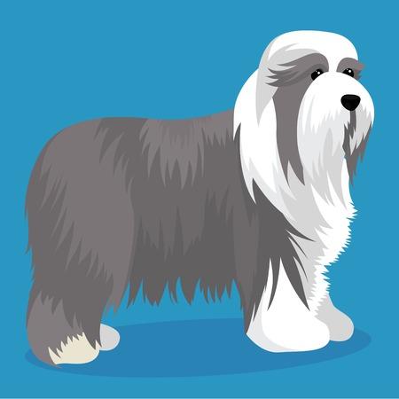 Bearded collie dog vector illustration Illustration