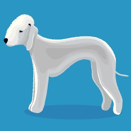 Bedlington terrier dog vector illustration Çizim