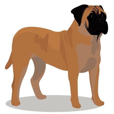 Bullmastiff dog vector illustration Çizim