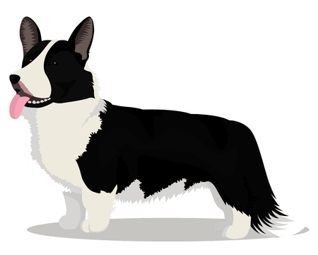 Cardigan Welsh corgi vector illustration