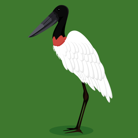 Jabiru cartoon bird vector illustration Çizim