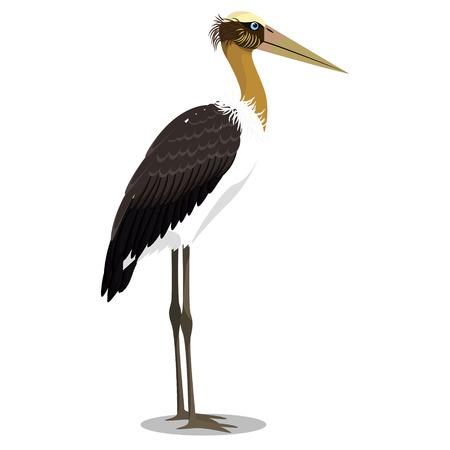 Lesser adjutant cartoon bird vector illustration Çizim