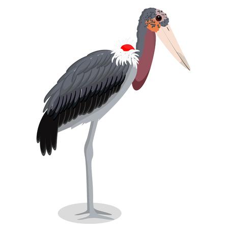 Marabou stork cartoon bird vector illustration Vector Illustration