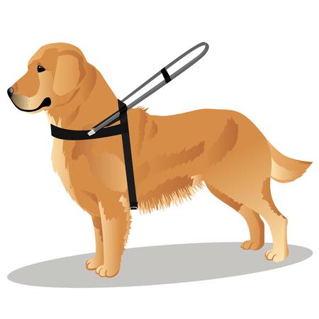 retriever dog vector illustration Illustration