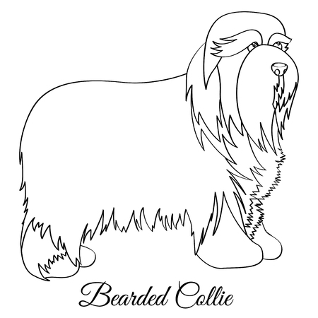 Bearded collie coloring 일러스트