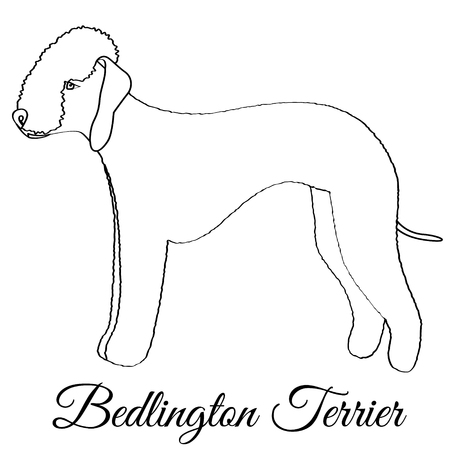 Bedlington terrier dog coloring