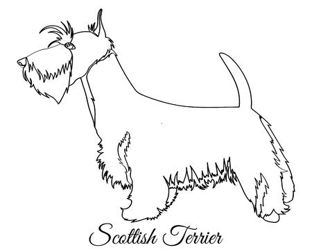 Scottish terrier dog coloring Illustration