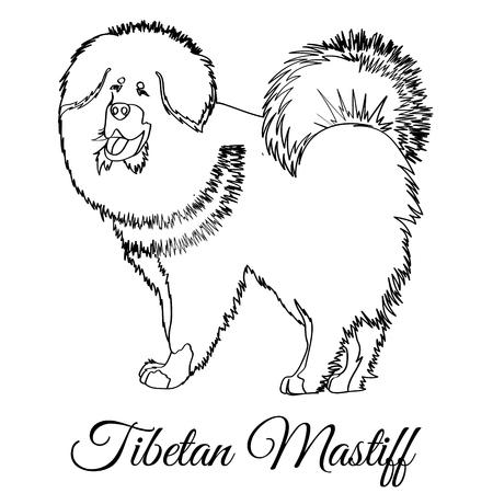 Tibetan mastiff dog coloring Ilustrace