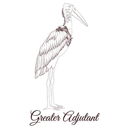 Greater adjutant stork cartoon bird coloring