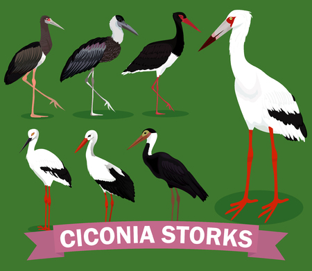 Ciconia storks set vector illustration Ilustrace
