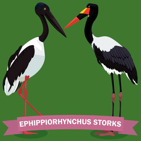 Ephippiorhynchus storks set vector illustration Ilustrace
