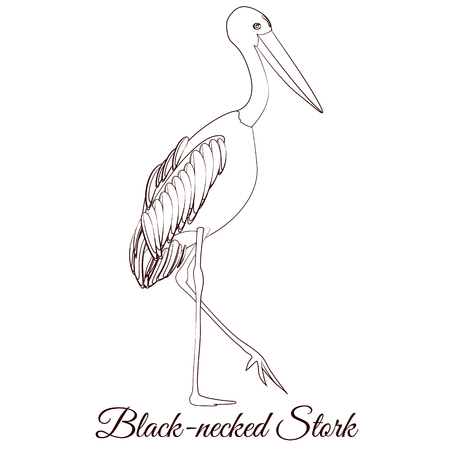 Black necked stork cartoon bird coloring  イラスト・ベクター素材