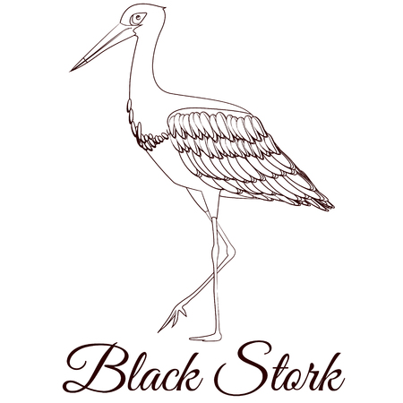 Black stork cartoon bird coloring  イラスト・ベクター素材