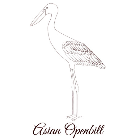 Asian openbill cartoon bird coloring