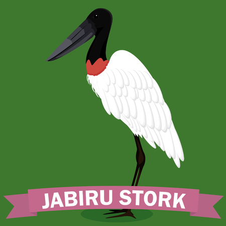 Jabiru cartoon genus bird vector illustration Фото со стока - 125939930