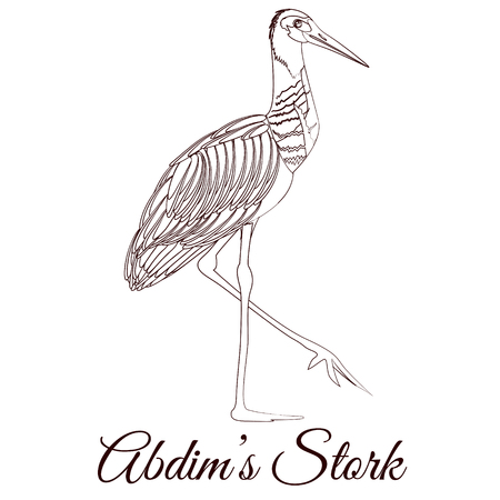 Abdim s stork cartoon bird coloring
