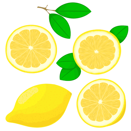 Set of hand drawing lemons vector  イラスト・ベクター素材