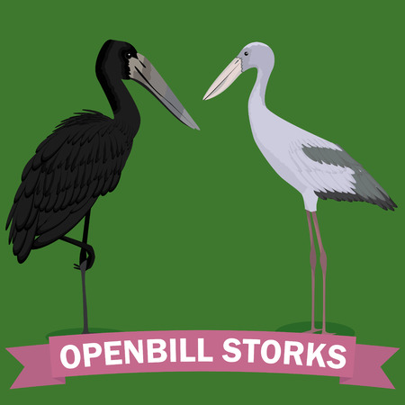 openbill cartoon genus bird vector illustration  イラスト・ベクター素材