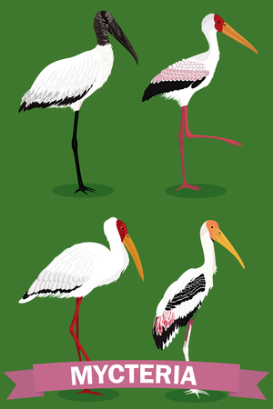 Mycteria cartoon genus bird vector illustration