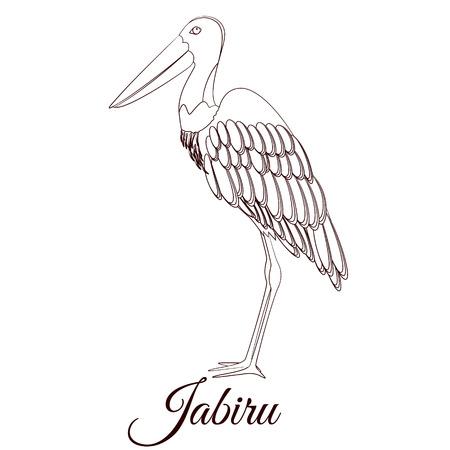 Jabiru stork cartoon bird coloring