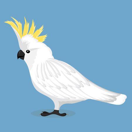 Sulphur crested cockatoo Reklamní fotografie - 127908620