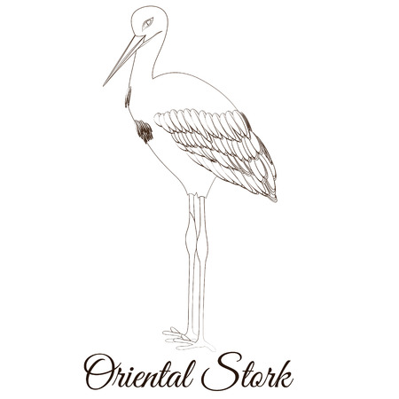 Oriental stork cartoon bird coloring vector illustration