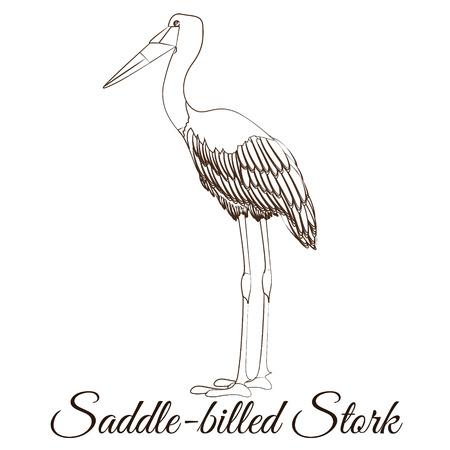 Saddle billed stork cartoon bird coloring Illustration