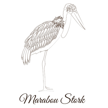 Marabou stork cartoon bird coloring vector illustration  イラスト・ベクター素材