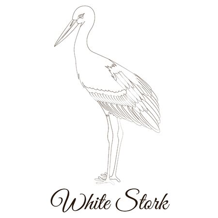 White stork cartoon bird coloring Reklamní fotografie - 127908625