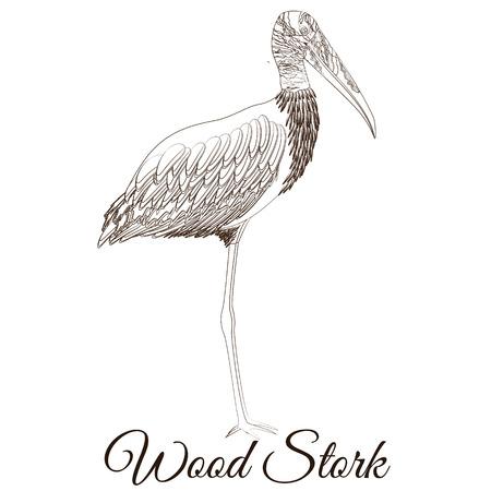 Wood stork cartoon bird coloring