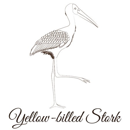 Yellow billed stork cartoon bird coloring vector illustration