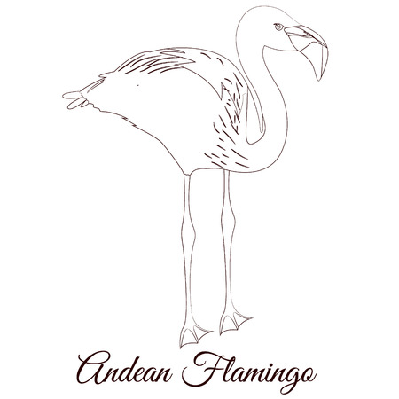 Andean flamingo outline bird vector illustration